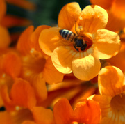 13th May 2014 - (Day 89) - Trumpet Buzz