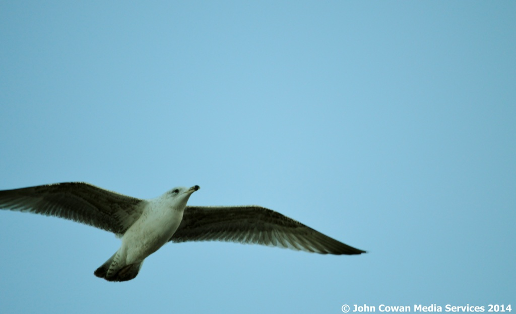 Seagull by motorsports