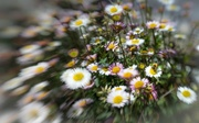 15th May 2014 - Lensbabee!