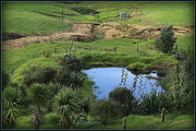16th May 2014 - The pond