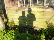 15th May 2014 - Shadows on the shed