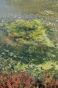16th May 2014 - Still Water