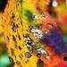 Autumn Rainbow by wenbow