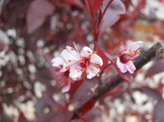 16th May 2014 - Pink Flowers