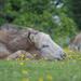 afternoon nap..... by jantan