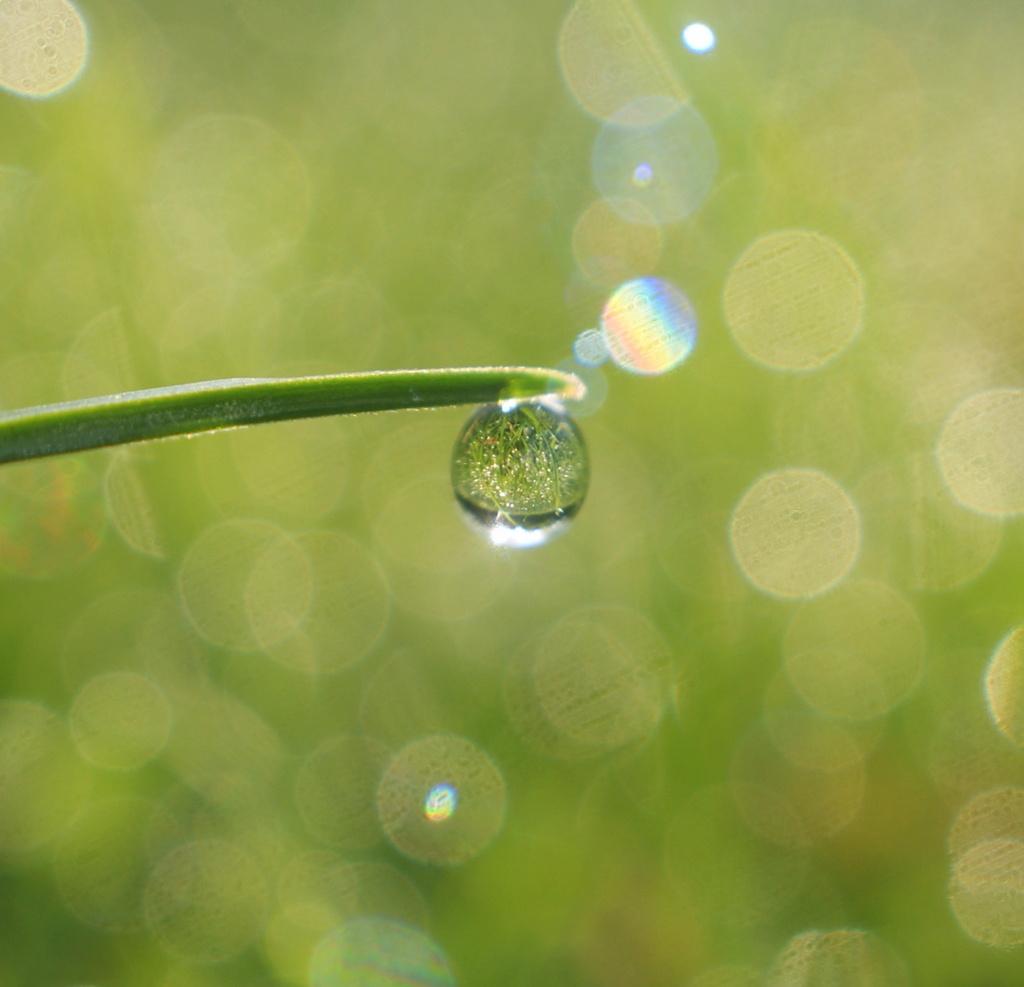 A drop of bokeh by filsie65