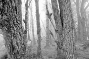 18th May 2014 - Lost in the Woods