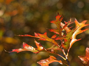 18th May 2014 - Autumn Golden Hour