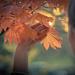 golden warmth  by ltodd