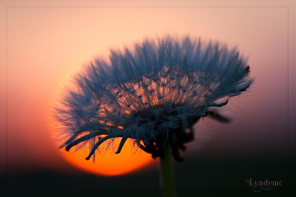 Seeds Against the Sun by lyndemc
