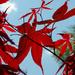 Seeing Red by ukandie1