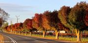 20th May 2014 - Autumn roadside