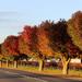 Autumn roadside by flyrobin