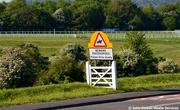 20th Jun 2014 - Beware Horses