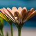 Petal Window by salza