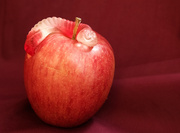 19th May 2014 - (Day 95) - The Worm & the Apple