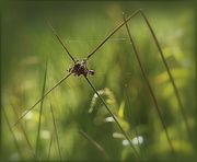 21st May 2014 - Rushes