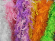 21st May 2014 - Feathers