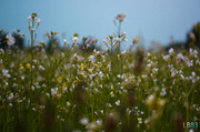 21st May 2014 - Wild Flowers
