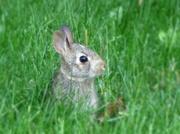22nd May 2014 - Little Bun-Bun