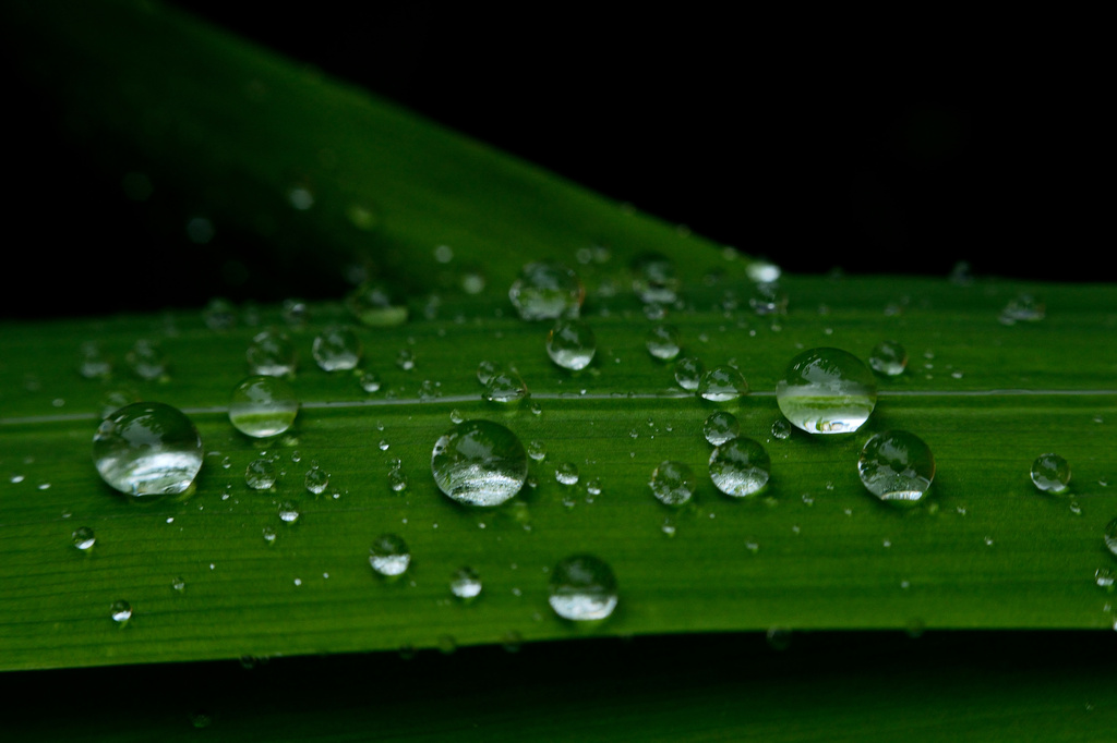 Water drops by richardcreese