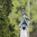 Blue Jay by gardencat