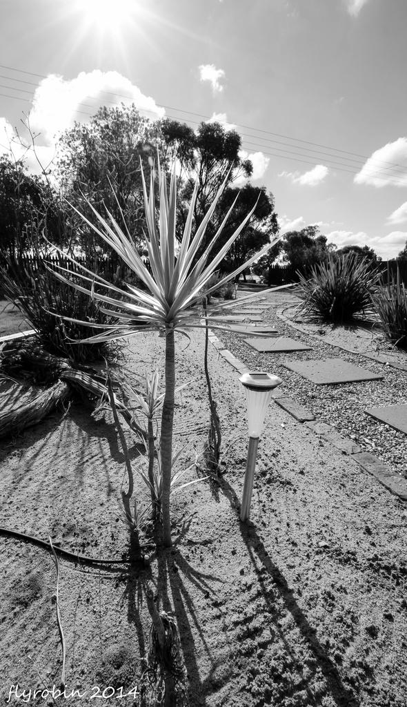 Garden in the hot Australian sun by flyrobin