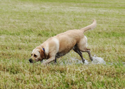 24th May 2014 - Splashing in the water - 24-05