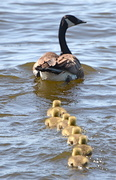 24th May 2014 - Follow The Leader