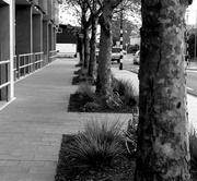 19th May 2014 - Roadside tree gardens