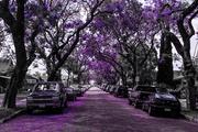 25th May 2014 - (Day 101) - Victoria Avenue