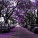 (Day 101) - Victoria Avenue by cjphoto