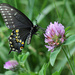 Where have my butterflies gone? by cjwhite