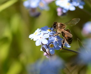26th May 2014 - To Bee or Not To Bee