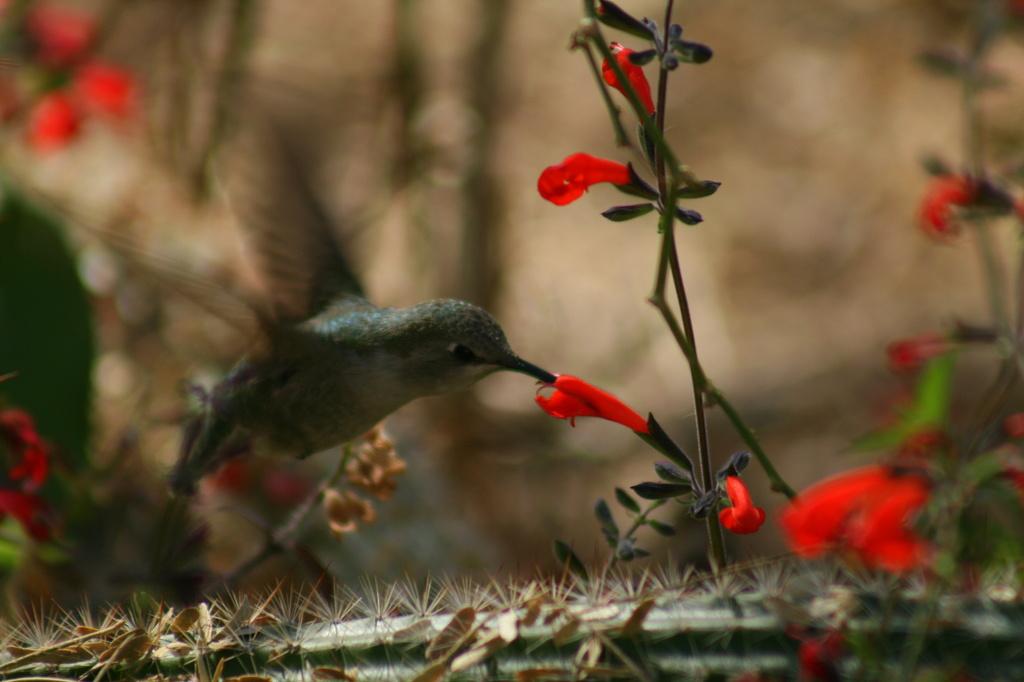 Hummingbird by kerristephens