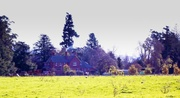 27th May 2014 - Rural Elegance