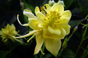 27th May 2014 - Yellow Beauty