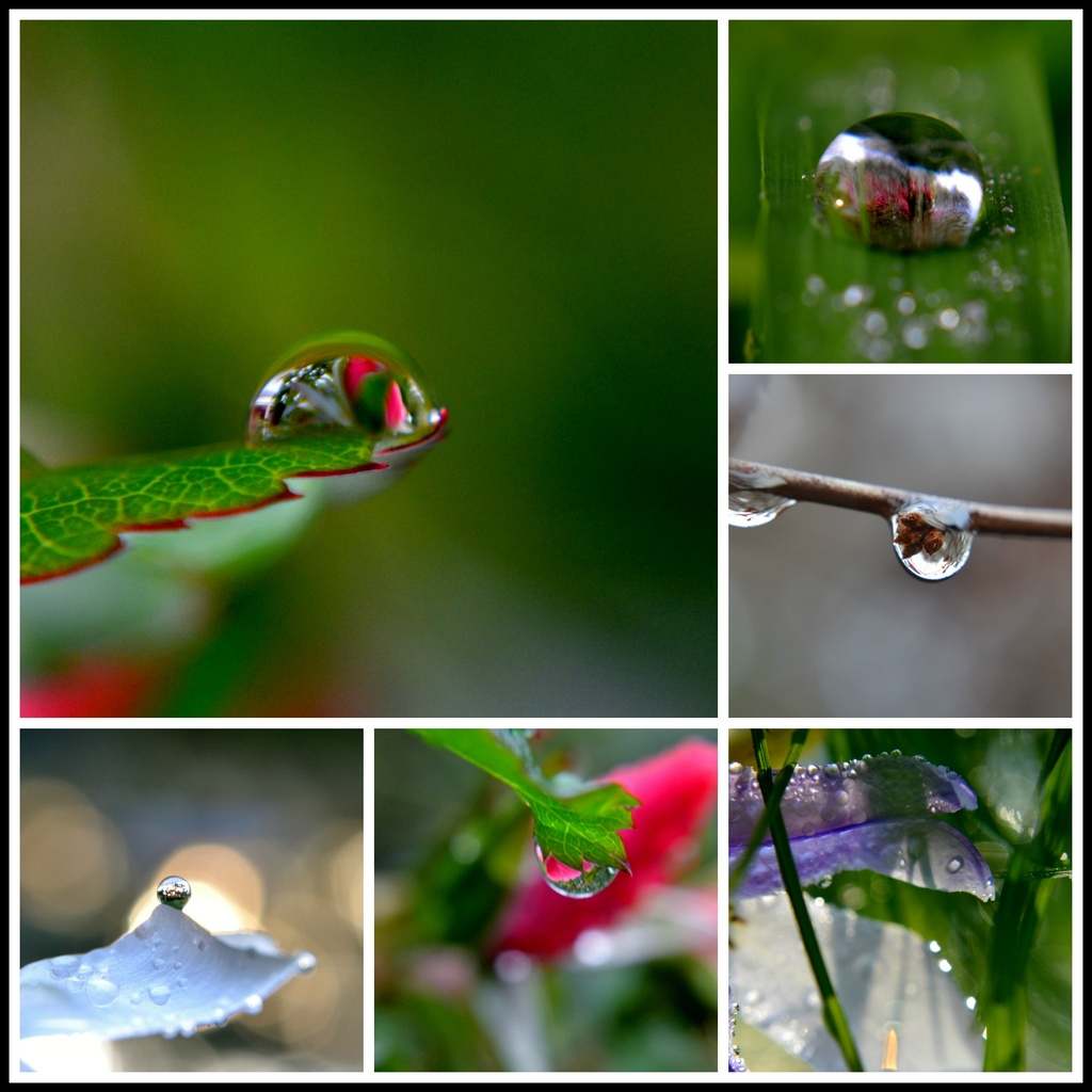 droplet collage  by dianeburns
