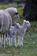 28th May 2014 - Nothing so wonderful as motherly love