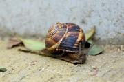 "25th May 2014 - ""Oui, I'm a Beautiful French Snail"""