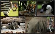 29th May 2014 - Hamilton Zoo