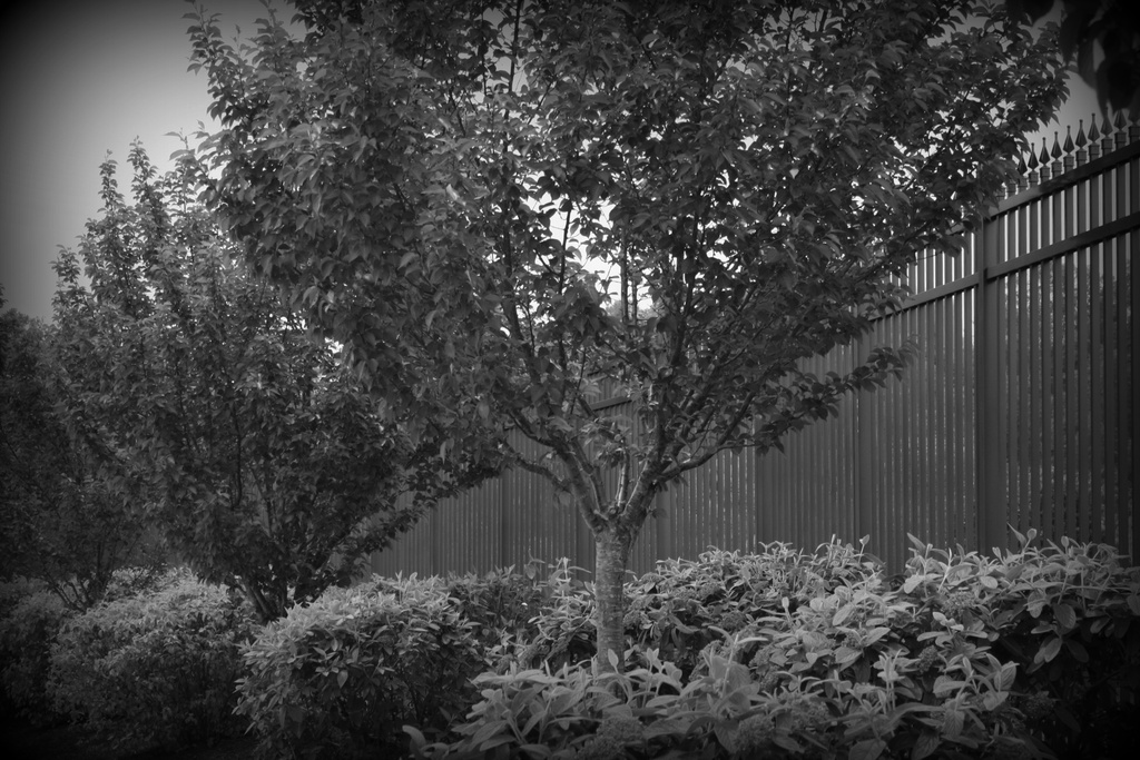 B&W trees and bushes by mittens