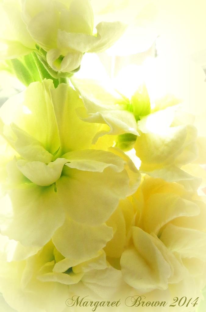 Lemon Meringue by craftymeg