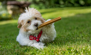 """30th May 2014 - Mitzi says - """"I do like a nice cigar after dinner""""."""