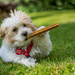 """Mitzi says - """"I do like a nice cigar after dinner"""". by vignouse"""