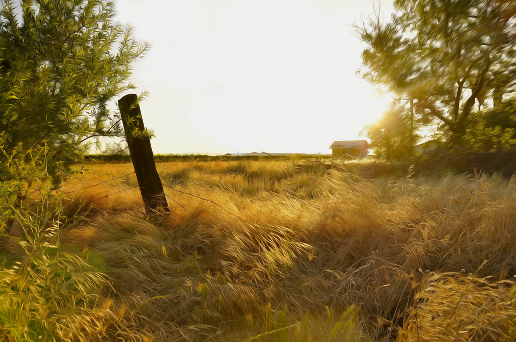 Country Morning by joysfocus