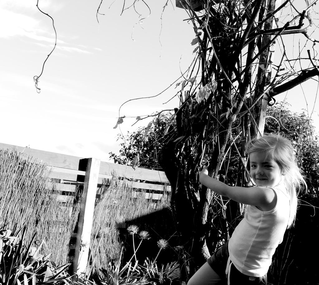 Garden climber by kiwinanna
