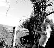 20th May 2014 - Garden climber