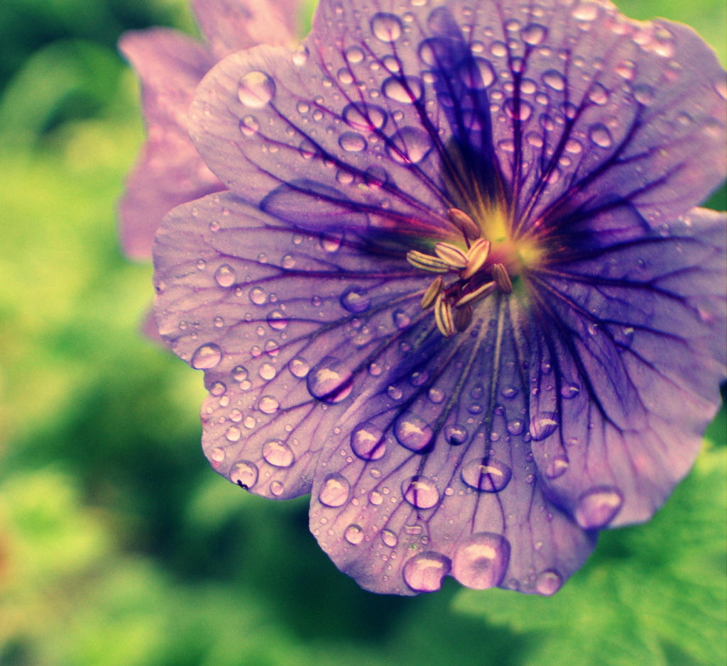 Perennially wet! by filsie65