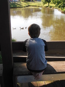 31st May 2014 - Watching the Ducks